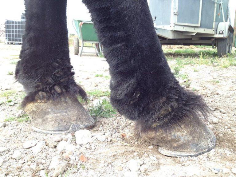 CPL bij paarden herkennen