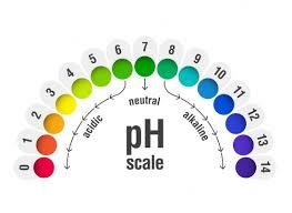 pH darmflora paard