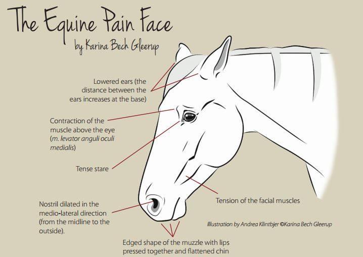 paard heeft pijn