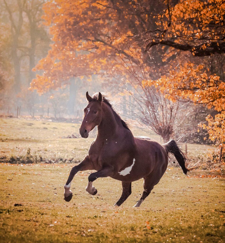 Blij paard