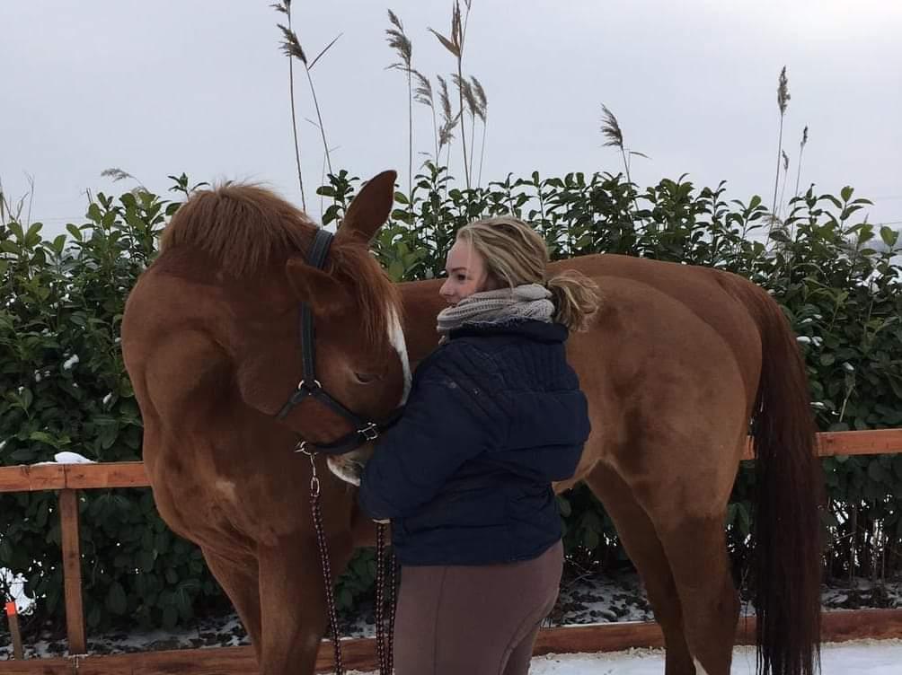 lichaamstaal_paard