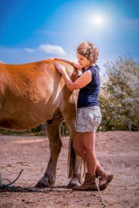 Paard behandelen