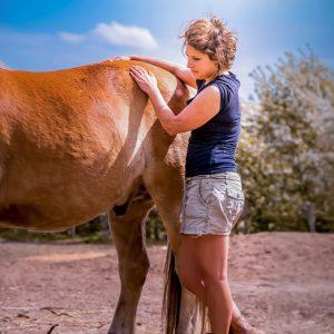 Behandeling_paard
