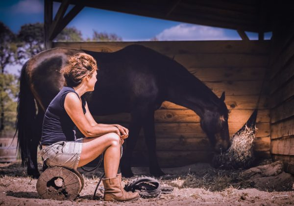 Reading_paard