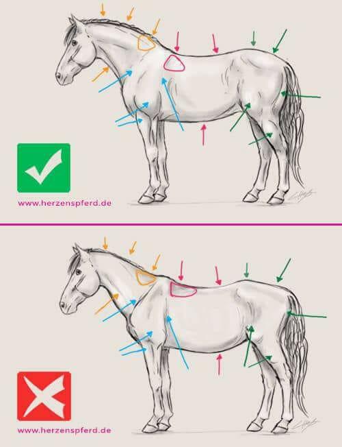 Houding_paard
