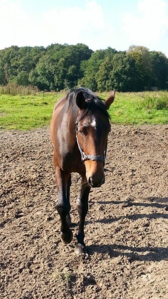Depressie bij paarden