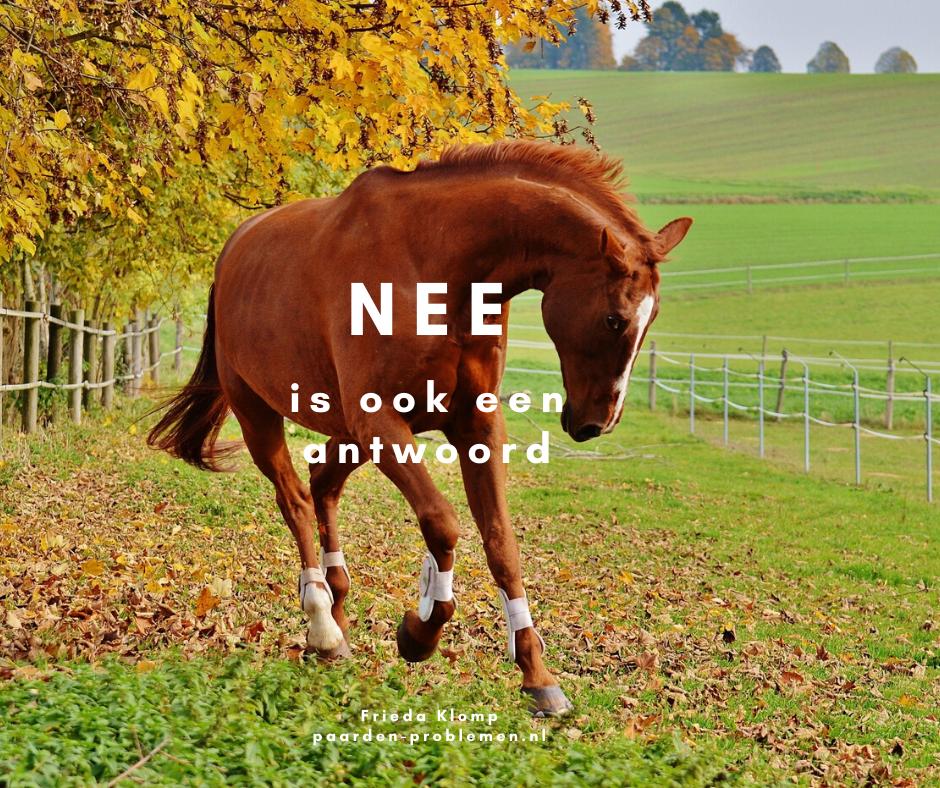 Waarom desensibiliseren niet werkt bij angstige paarden