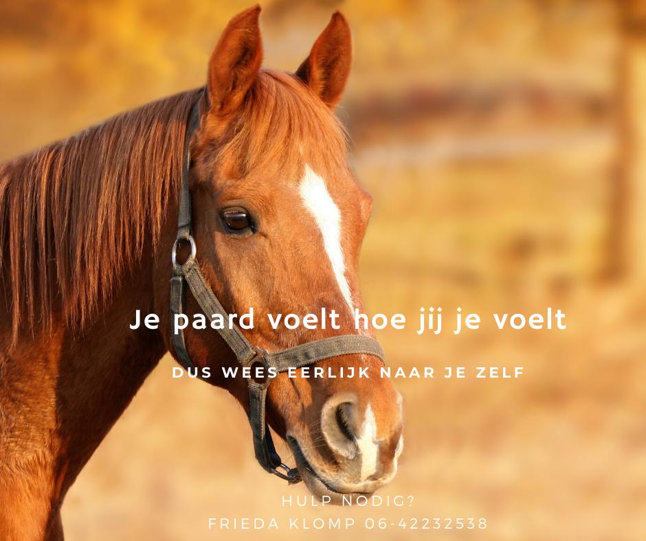 Paard_gevoel