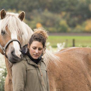 Advies paard