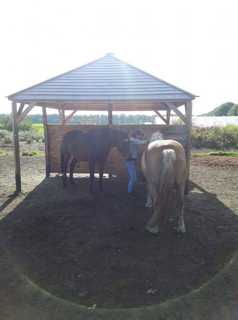 Verdriet bij paarden