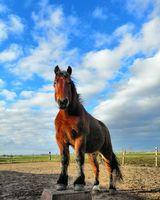 healing paard ervaringen