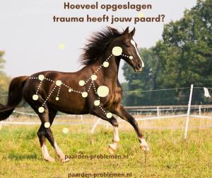 trauma paard