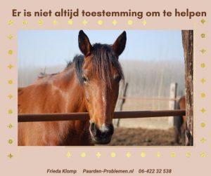 hoger zelf paard