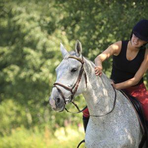 vertrouwen paard